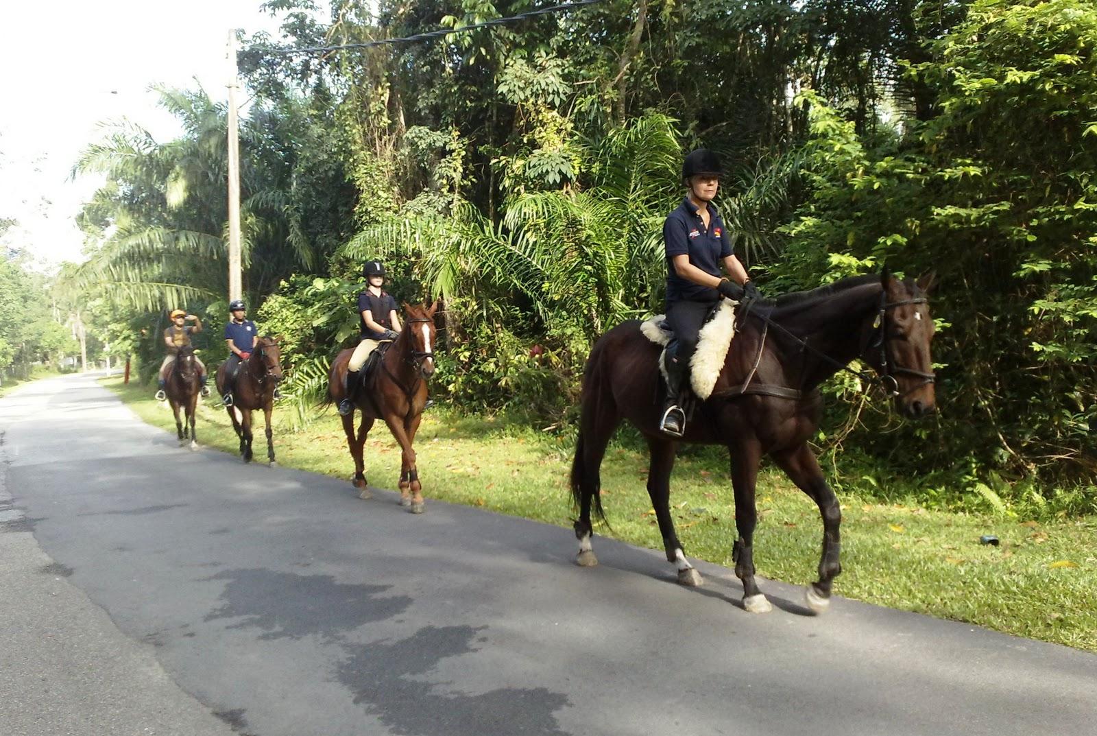 As Equestrian Centre Jungle Tracking