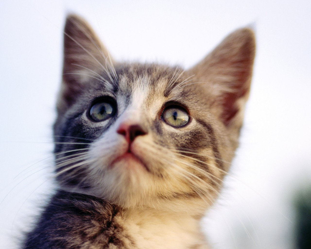 Cute Animated Fairy Wallpapers Strictly Wallpaper Wallpapers For Cat Lovers 2