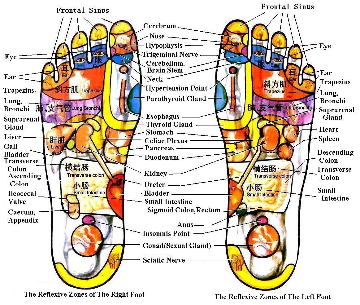 foot massage therapy diagram labeled skin firebert reflex points hands feet and face