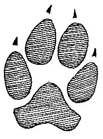RedHunterLLC: Coyote tracks and domestic dog tracks.