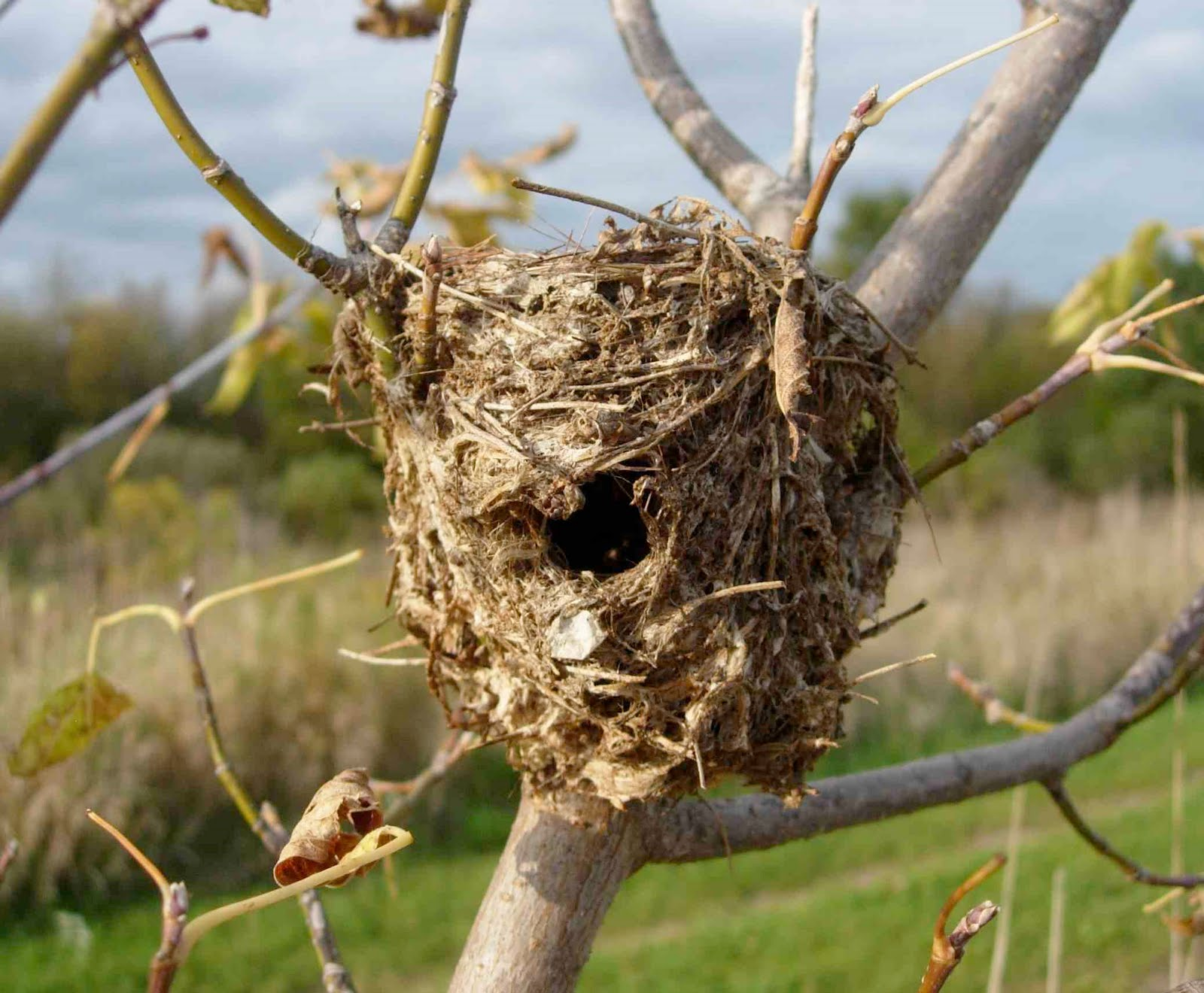 "TYWKIWDBI (""Tai-Wiki-Widbee""): I have a question about a ... Bird Nest With Bird"