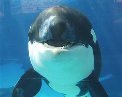 Welcome to SeaWorld: Shamu: Close Up