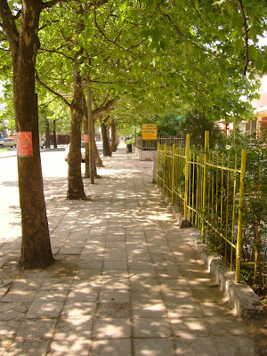 Green Tree Lined Yambol Street