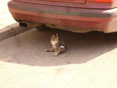 A Yambol Cat In The Shade