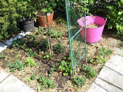 apparaat om katten uit de tuin te houden