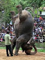 O homem e o elefante