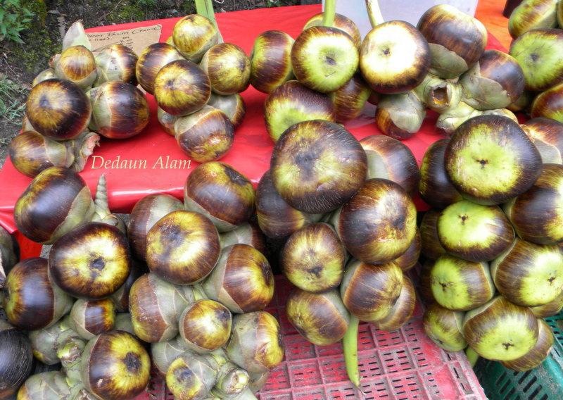 buah pokok kelapa laut , buah kelapa laut, buah muda kelapa laut,  air kelapa laut, ciri-ciri pokok kelapa laut