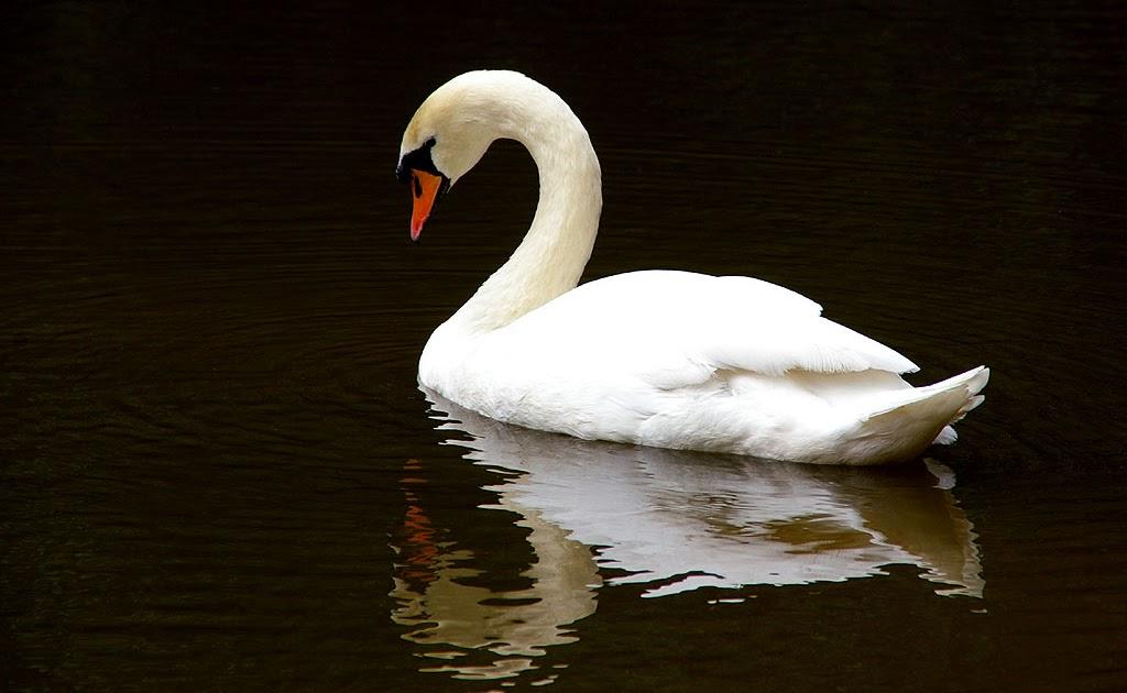 Virtual-Babaji-Vishwananda: Paramahansa, The Great White Swan