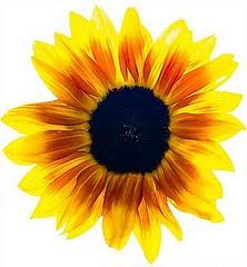 http://divulgador4.blogspot.com/2010/09/cientistas-conseguem-ler-pensamentos.html