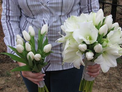 Awesome Amaryllis Sisters Floral Design Studio