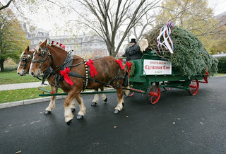 Horse Drawn Carriage with Christmas Trees