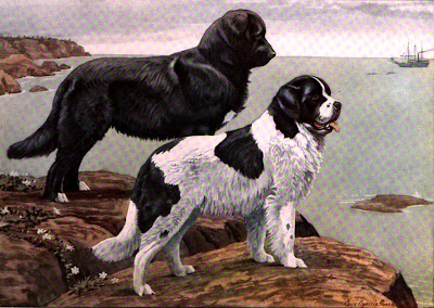 The Newfoundland and St. Bernard