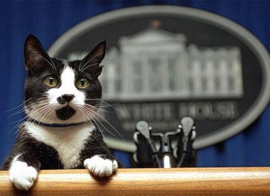 [Presidential+Pets+In+History+13.jpg]