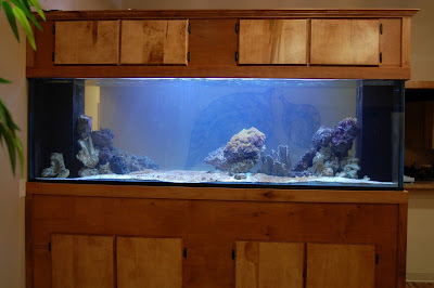 Saltwater fish tank near me 300gal saltwater fish tank for Fish place near me
