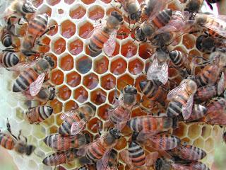 Γιατροσόφια με μέλι
