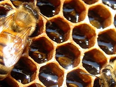 http://2.bp.blogspot.com/_TywP2Op67Ks/TTrMjajaASI/AAAAAAAAAtw/_xbwC-q_OIg/s1600/23669013.honeycomb%255B1%255D.jpg