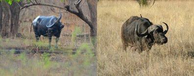Taman Nasional Baluran dengan padang savannah Afrika