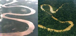 Hutan Kalimantan dengan hutan Amazon
