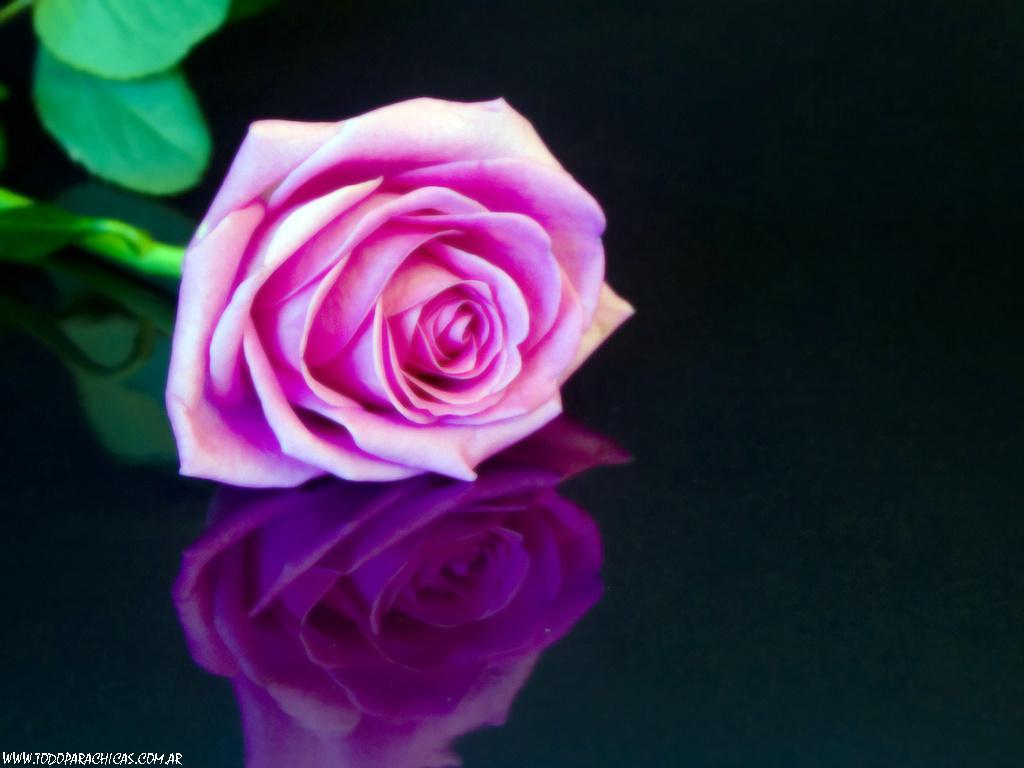 Imagenes de rosas para fondo de escritorio for Imagenes 3d hd con movimiento
