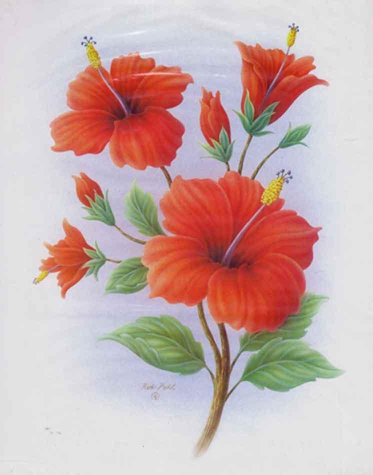 Bunga yang indah bunga sepatu