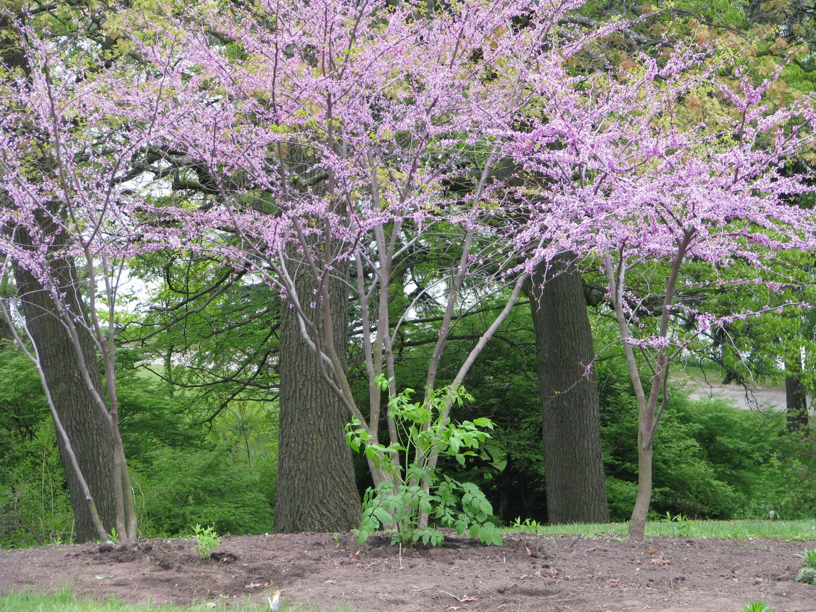 Pollinator Gardens May 2010
