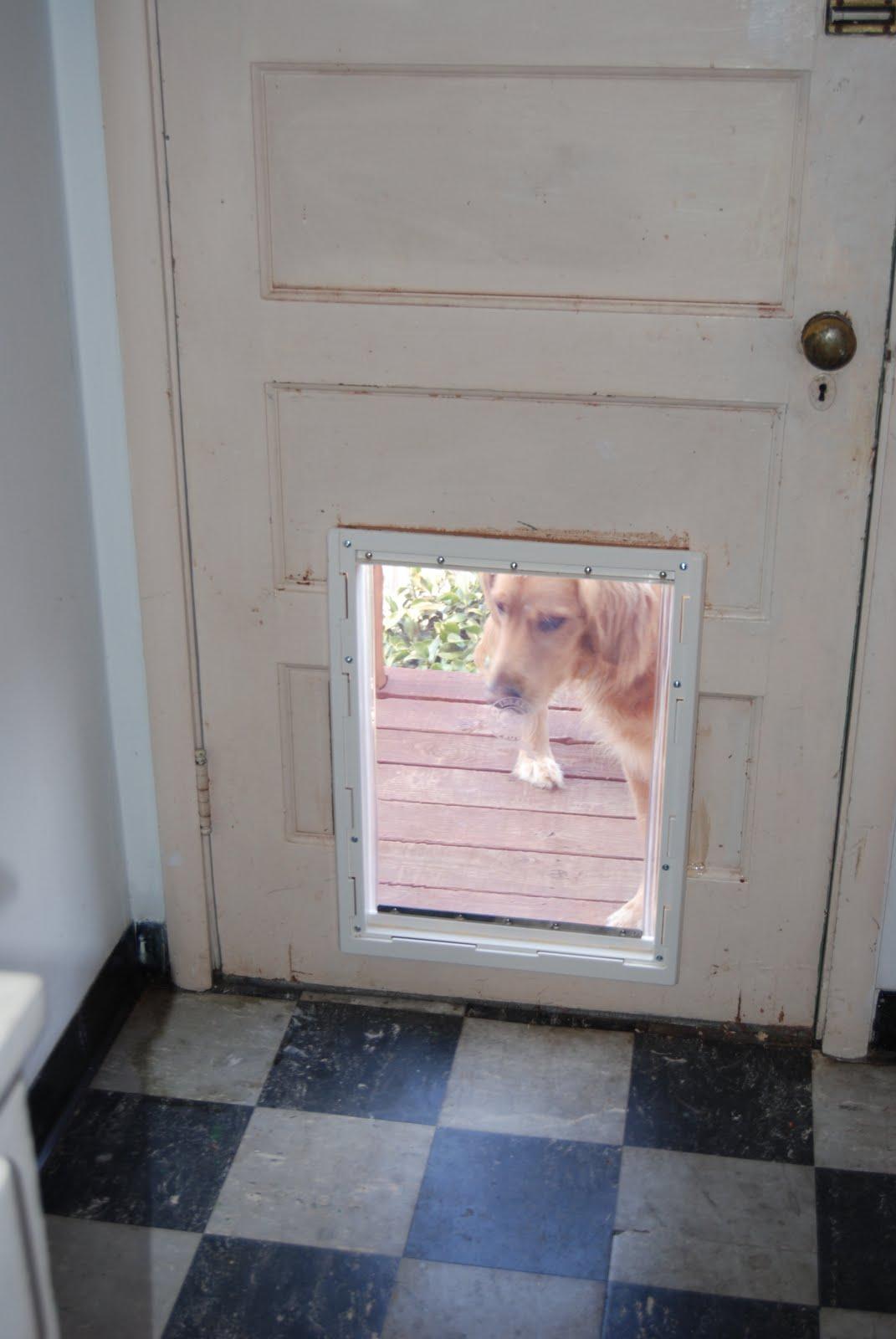 Build Your Own Doggie Door Sulechow