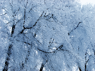 winter wallpaper snow ice