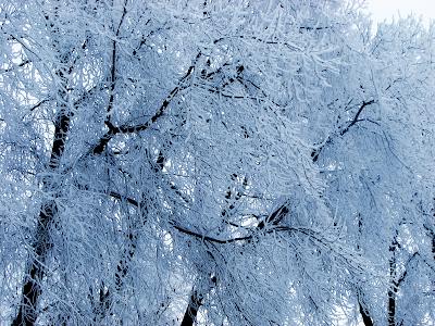 winter wallpaper snow ice
