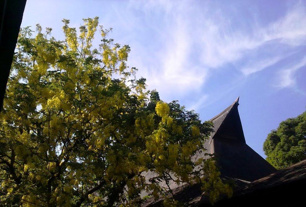 https://i1.wp.com/2.bp.blogspot.com/_Ug9sb9IJXvA/S9eoNfEvYtI/AAAAAAAAAOM/p_Zo7ZfwDLM/s1600/yellow+sakura.jpg