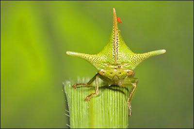 Serangga dengan Bentuk Teraneh