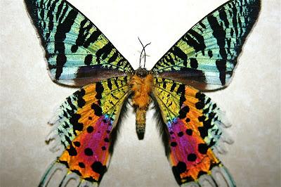 Serangga Paling Cantik