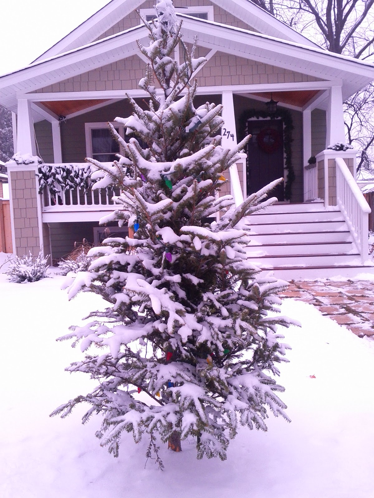 Elmhurst Front Yard Christmas Tree Tradition: 2010 Edition