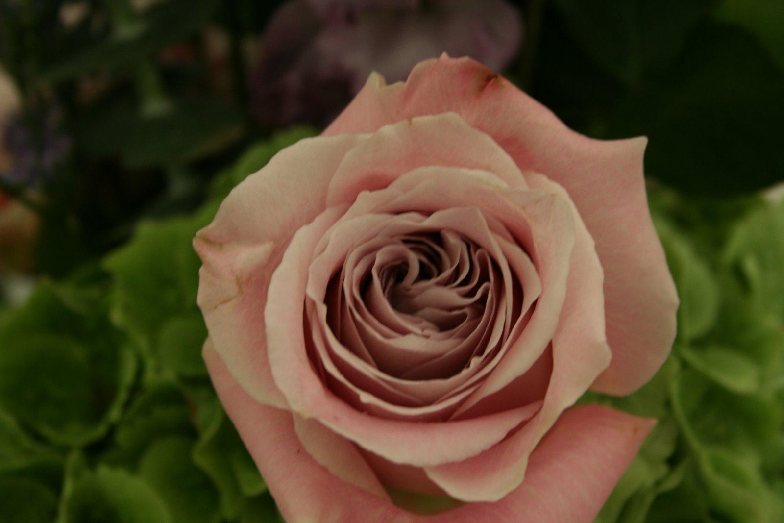 Flower Design Buttonhole & Corsage Blog: Groom's Special ...
