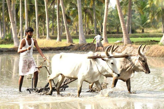 Vamsam-Arul Nidhi photos/Stills-6