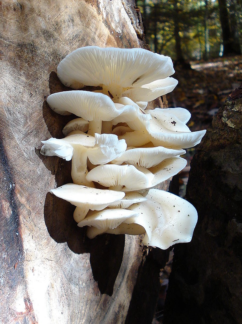 There's a Fungus Among Us: MUSHROOMS CAN BITE IN OTHER WAYS
