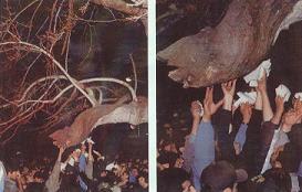 أصبحت الشجرة النازفة للدم في إيران مكاناً للتبرك بالدماء النازلة منها