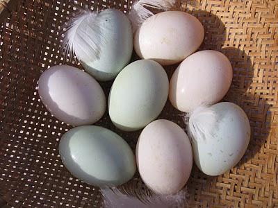 Khaki Eggs