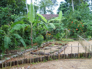 Home Vegetable Garden In Sri Lanka