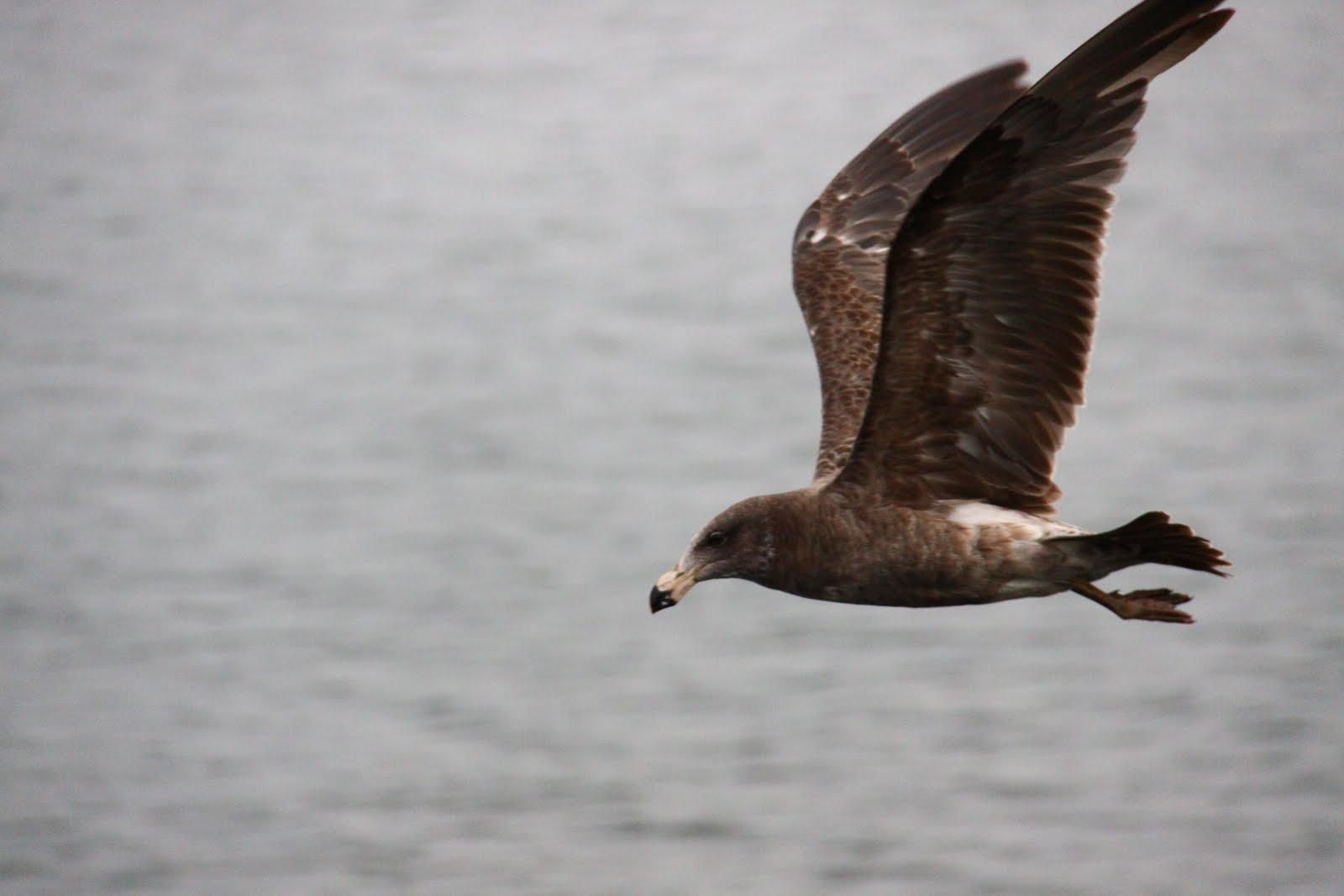 ViSiON of eArTH Terbang Bebas