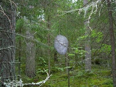 Pistiäiset Suomessa