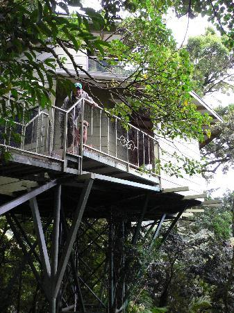 Hidden canopy treehouses boutique hotel booking