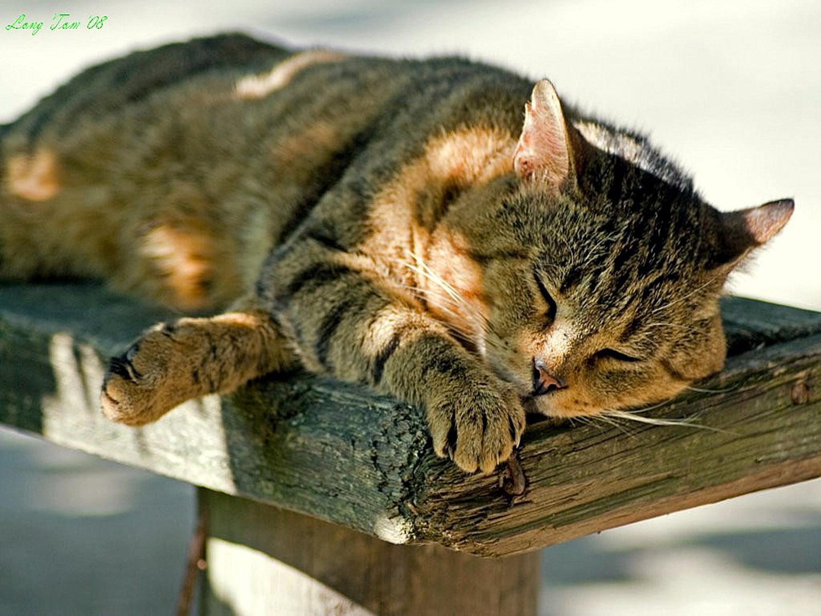 Fonds d 39 cran photos gratuit fond d 39 cran chat wallpaper - Manga femme chat ...