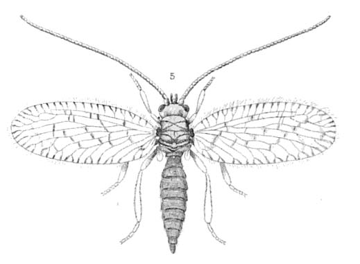 Catalogue Of Organisms Name The Bug 21