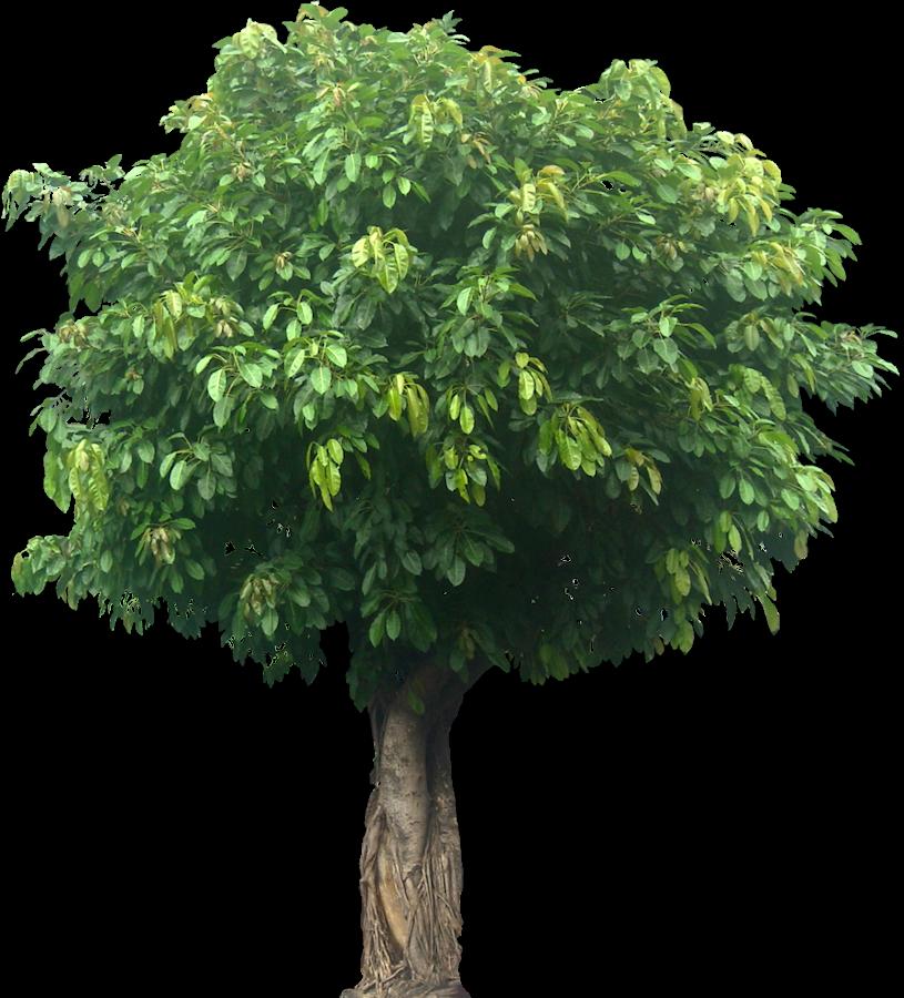 Tall Plants Names