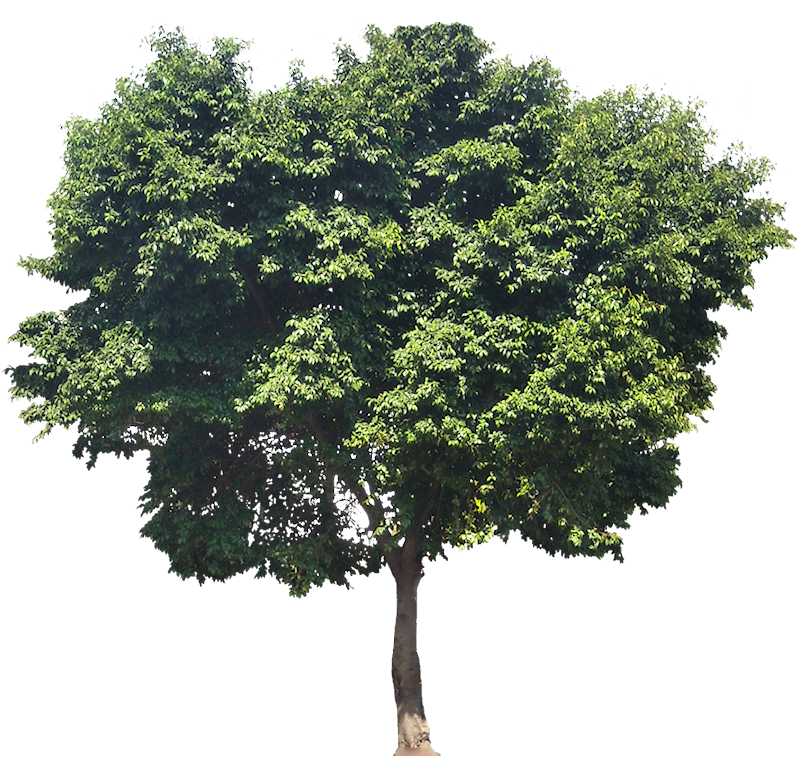 the fig tree cookbook pdf