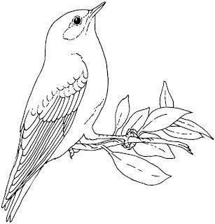 Adventures On Beck's Bounty: The Eastern Bluebird