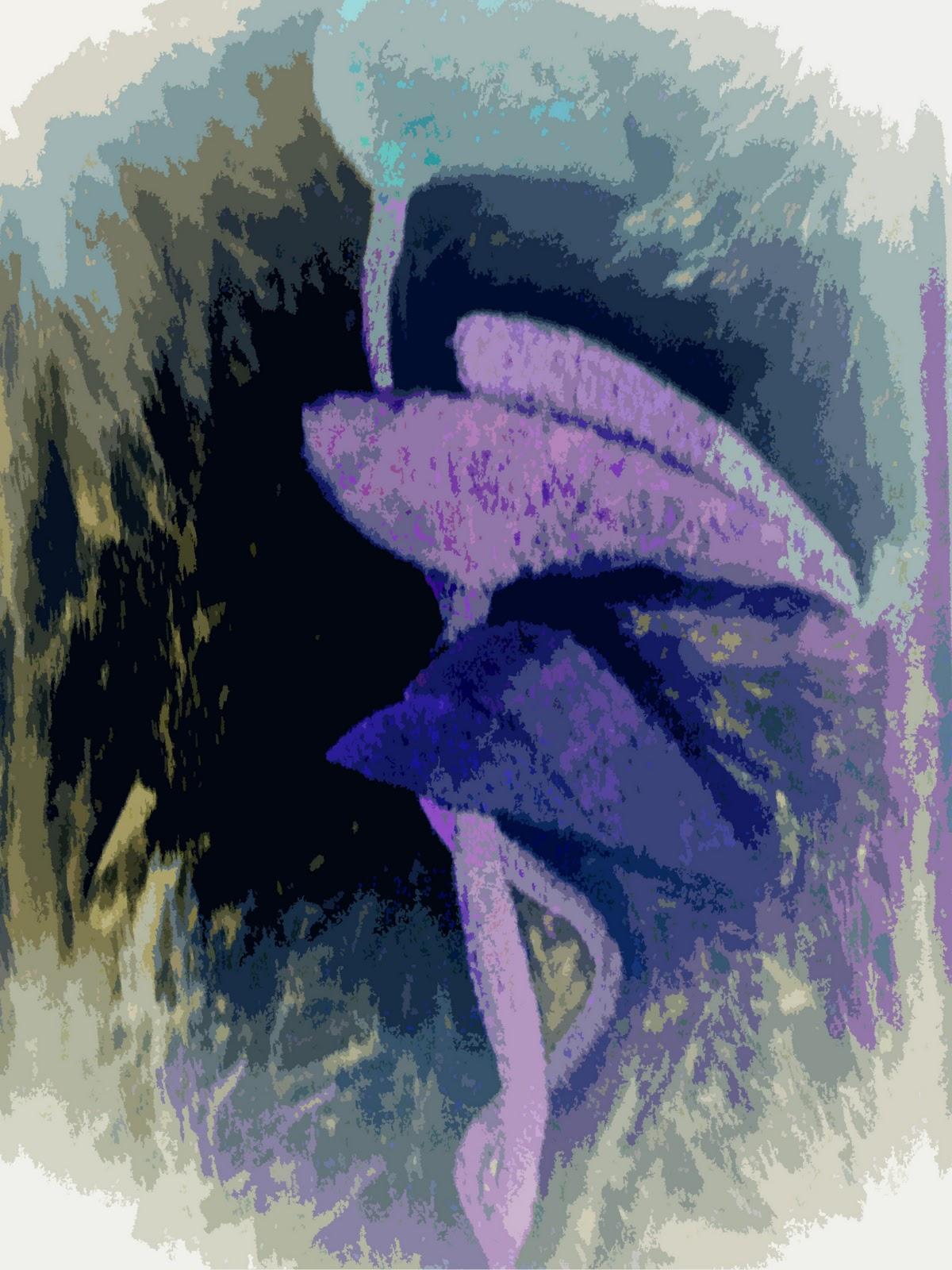 Sebastian Digital Art A Touch Of Frost