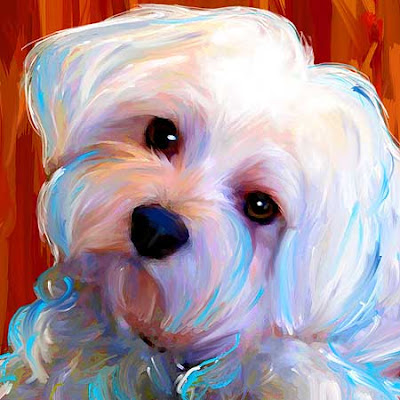 maltese painting chica bailey gracie art dog blog 796