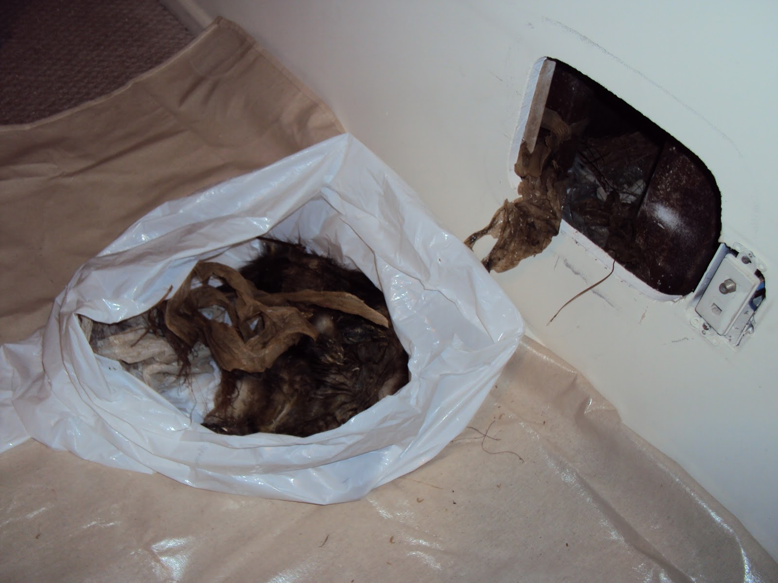 All City Animal Trapping Dead Animal Removal Carcass