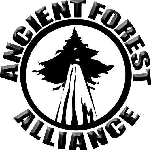 My French Forest The Fight To Save The Endangered Old Growth
